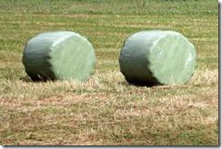 baled hay cylinders 8-1-2015 6-03-20 AM 2007x1339