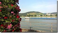flowers and Rhein