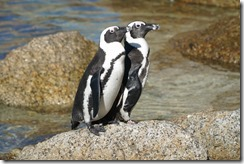 two penguins best